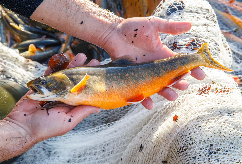Fischerei Ausseerland